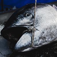 big-tuna-fish-the-paleo-diet